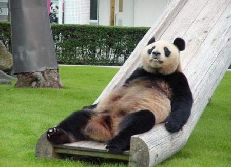 Panda op glijbaan